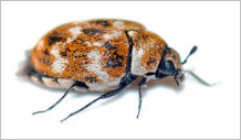 Pest Control Operators of California (PCOC)